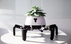 Crean macetas inteligentes que buscan el sol para las plantas