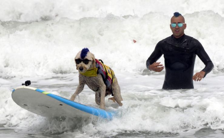 Perros surfeando