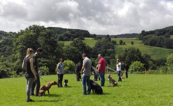 Clases de adiestramiento de perros en Oiartzun