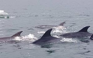 Avistan una decena de delfines en aguas de Hondarribia