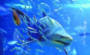 Un hospital para las especies marinas