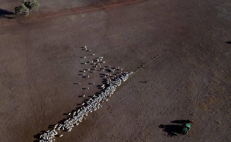 Una de las peores sequías en Australia