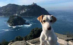 Pipper, el primer perro influencer de España, visita Donostia