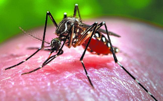 Tolosa realiza un muestreo para evitar la proliferación del mosquito tigre
