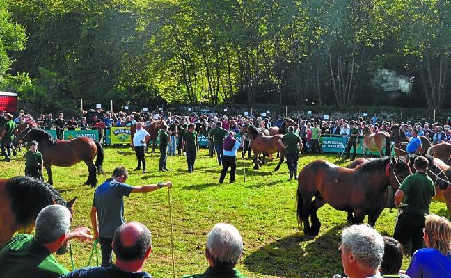 La raza Burguete se exhibe en Urdazubi