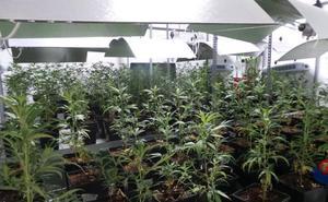 Decomisadas más de 1.100 plantas de marihuana en un pabellón industrial en Andoain