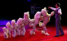 Larga vida al circo
