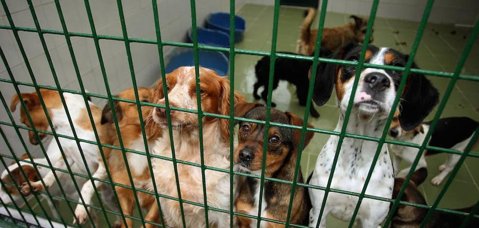 Absueltos de maltrato animal los dos veterinarios de la protectora de animales de Gipuzkoa