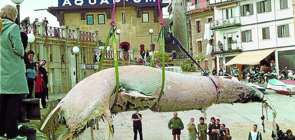 Una ballena emerge 18 años después