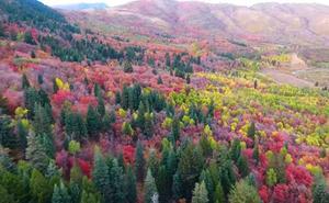 Cuando el otoño llega a Utah