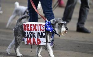 El 'no' de los perros ingleses al 'brexit'