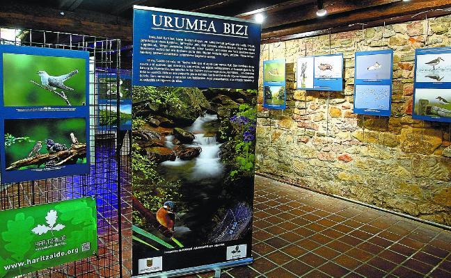 La exposición Urumea Bizi podrá visitarse estos días en Xenpelar Etxea