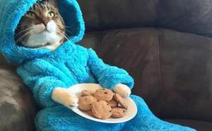 La embajada de EEUU en Australia manda una invitación falsa con un gato en pijama