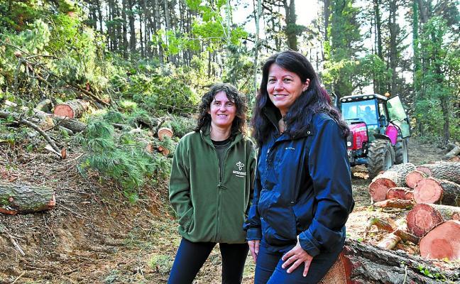 Comienza la recuperación del bosque Zingira para proteger el alcornocal