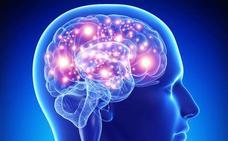 Científicos investigan si la 'hormona del estrés' puede reducir el tamaño del cerebro