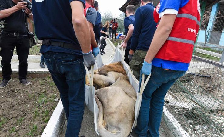Rescate en el 'zoo de los horrores'