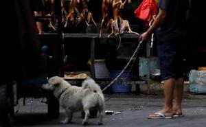 Polémica en China por una ciudad que prohíbe pasear perros en horas diurnas
