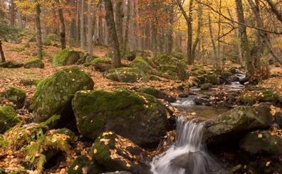 Valle del Lozoya, entre las últimas hojas y las primeras nieves
