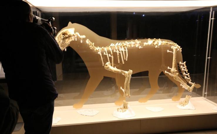 El Museo San Telmo expone el león de Arrikrutz