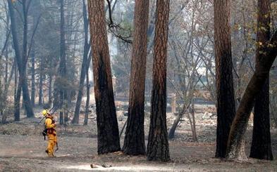 California busca antropólogos para identificar los cadáveres