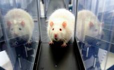 El Gobierno actualiza la norma de protección de animales usados en experimentos