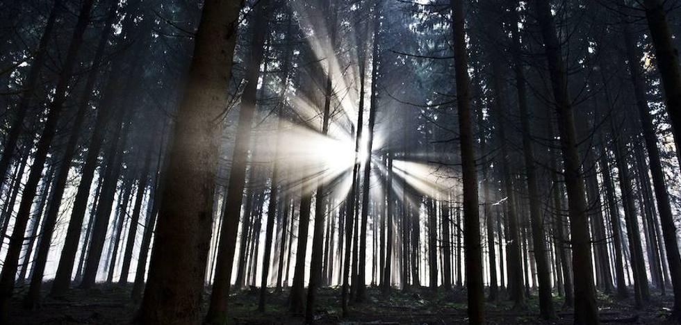 Volver la mirada hacia el bosque