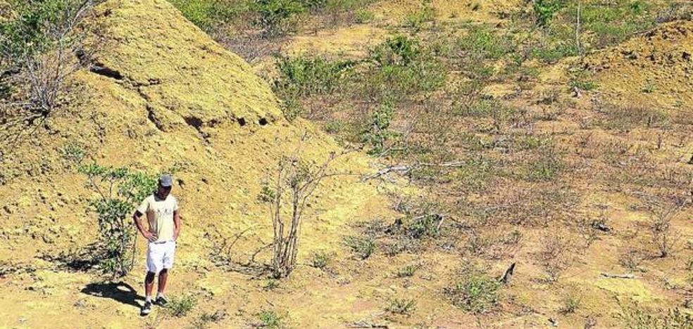 La megalópolis de las termitas