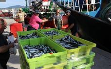 Azti-Tecnalia prevé «un reclutamiento medio-alto» para la costera de la anchoa de 2019