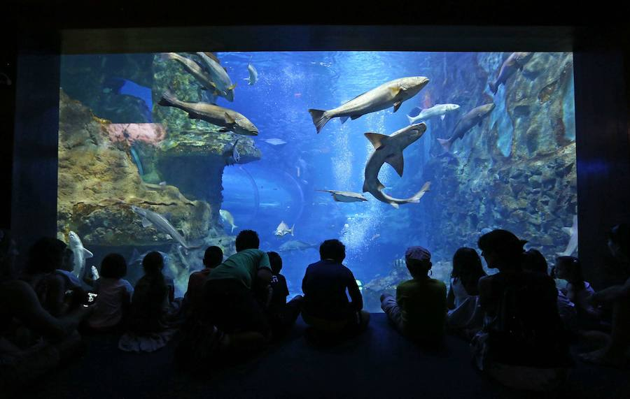 Un Belén sumergible en el Aquarium
