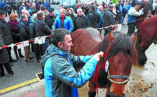 Los caballos a concurso se exhibirán en la zona del frontón Beloki