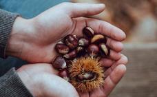 Beneficios de las castañas: el fruto estrella de la temporada