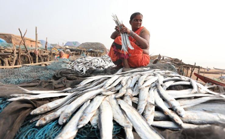 Temporada de pesca en la India
