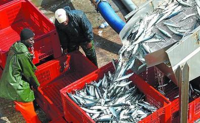 Los arrantzales confían en que la cuota de anchoa siga igual y que no baje en la merluza