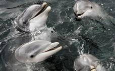 El intento de hablar con los delfines