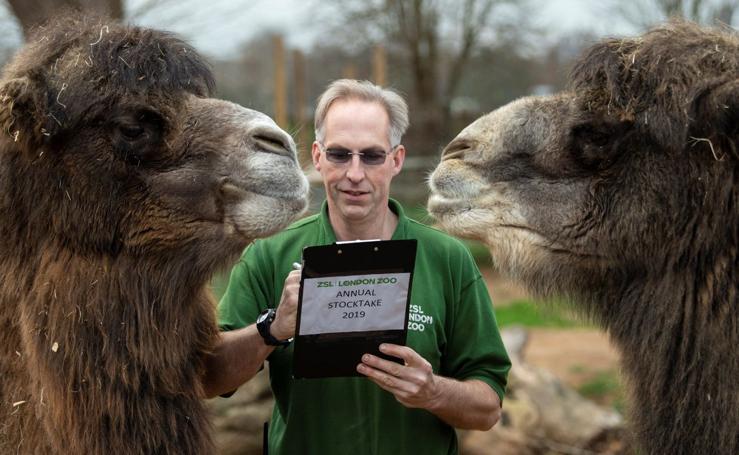 Recuento en el zoo de Londres