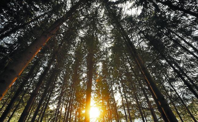La biomasa, futura energía comarcal
