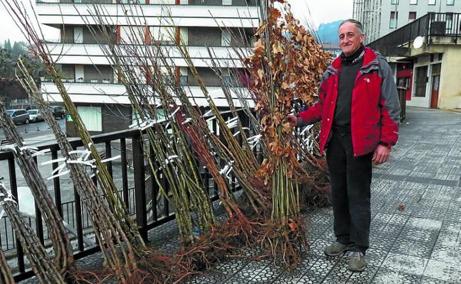 Las plantas de árbol llegan puntuales a la feria de Ordizia