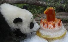 Cumpleaños en el zoo