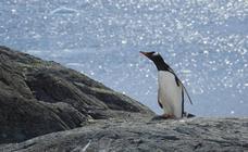 De expedición a la Antártida