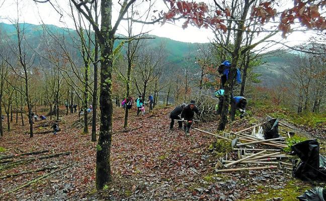 Voluntarios plantarán 250 arbustos en el robledal de Hidalgobaso el sábado