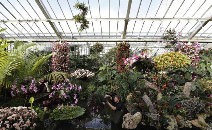 El esplendor de las orquídeas