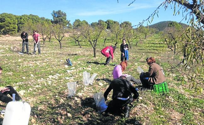 Agricultores experimentan la mezcla de cultivos