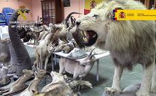 Desmantelan una red que traficaba con animales en peligro de extinción