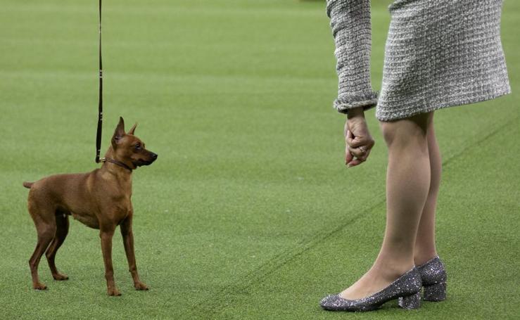 El mayor show canino