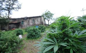 Proliferan los robos durante la época de cosecha, sobre todo en cultivos al aire libre