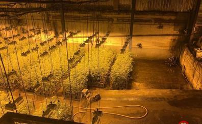 La Ertzaintza decomisa en los últimos cuatro años marihuana valorada en 27 millones