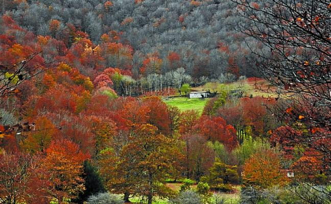 20.000 euros en ayudas para elaborar planes de gestión forestal para agentes privados