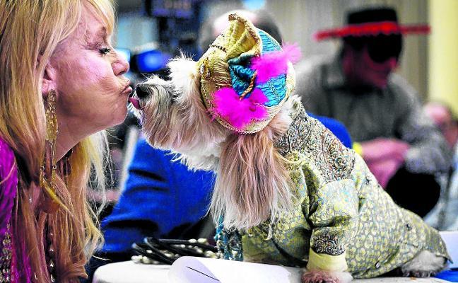 Carnaval canino