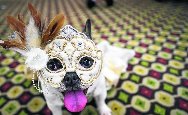 Carnaval canino, el show de moda en Nueva York