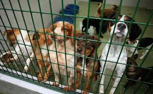 La Protectora de Gipuzkoa recogió el pasado año casi un millar de perros y gatos